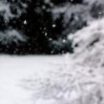 Na wiosnę spadł...śnieg