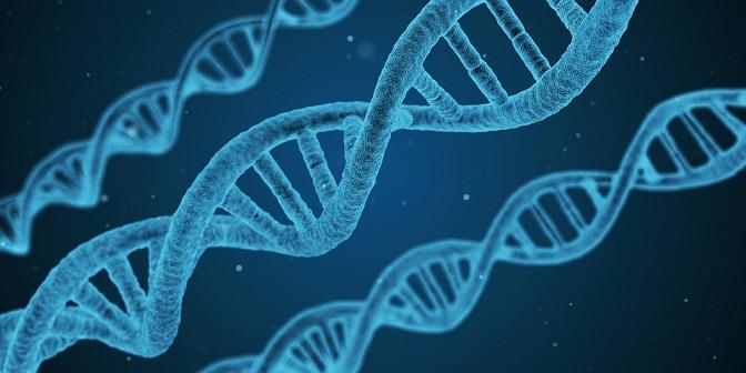 Kod DNA w badaniach nad RZS-em